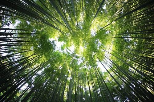 Arabia Saudyjska zasadzi na pustyni 10 mld drzew, by walczyć z emisją CO2 - ZielonaGospodarka.pl